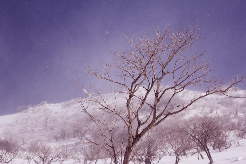 20130216_伊吹山_0040