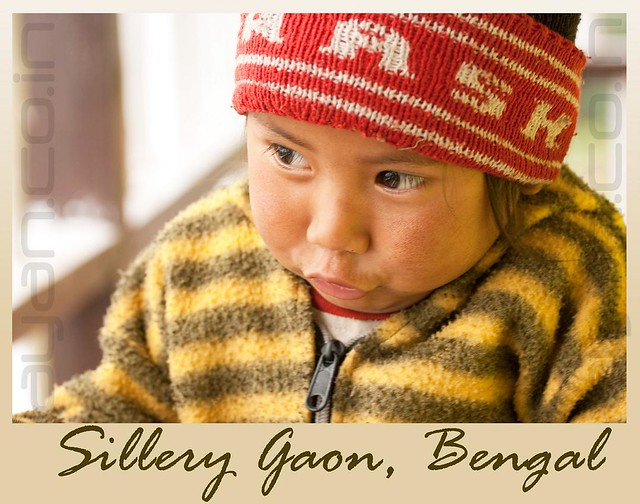 Sultan from Sillery Gaon | Bengal