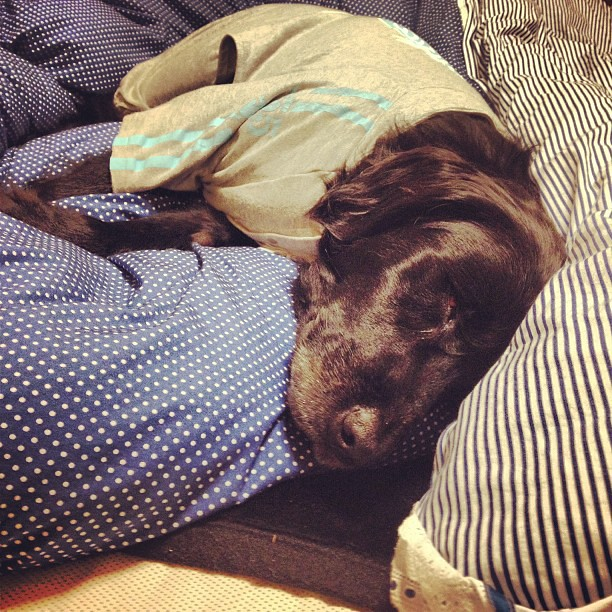 自宅で安心して眠るクララ   flat kurara   Flickr