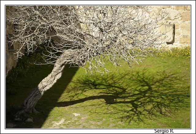 El árbol y la sombra II