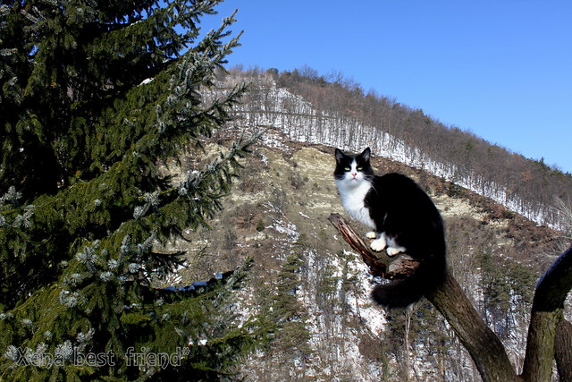 Sunbathing on the Top of the World