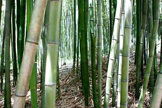 Juknokwon Bamboo Garden (죽녹원), Damyang (담양), South Korea | by Jirka Matousek