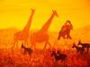 Traffick on Serengeti