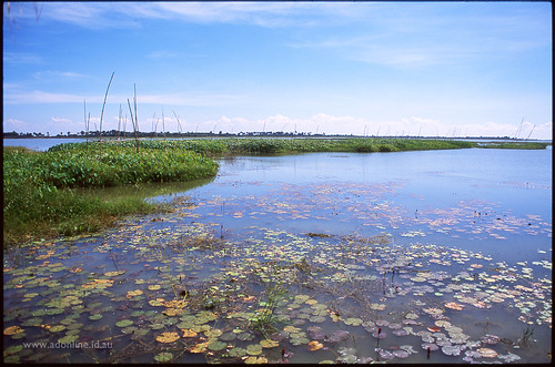 lake film water river landscape cambodia agfa kampongthom kampuchea agfaphoto agfaphotoctprecisa100 កម្ពុជា ស្រុកខ្មែរ ប្រទេសកម្ពុជា ព្រះរាជាណាចក្រកម្ពុជា kampongthomprovince កំពង់ធំ preypros