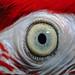 Parrots eye. by Jamo224