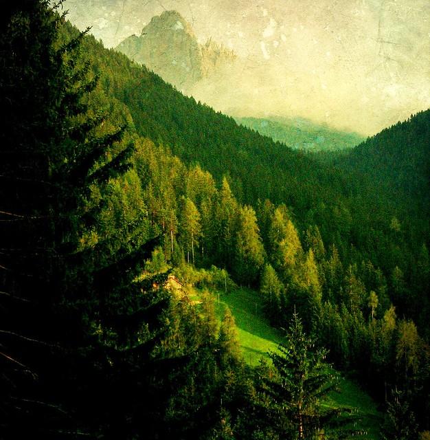 Italien, Welschnofen, Wiesen, Wälder, Berge , Tex. , 63-29/1900