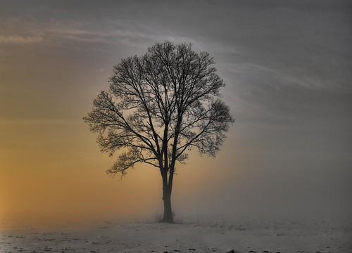 winter sky sun sunlight snow tree nature field fog rural sunrise canon landscape glow bright gray foggy scene yellows photomatix photomatixpro t2i bestcapturesaoi elitegalleryaoi vigilantphotographersunite vpu2 vpu3 vpu4 vpu5 vpu6