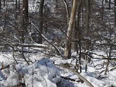 日, 2013-02-10 13:42 - 鹿の群れ