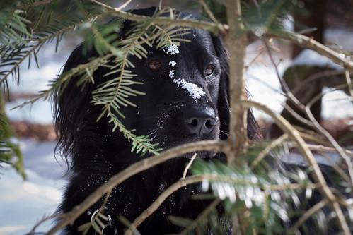 winter jungle dog | by crozefeet