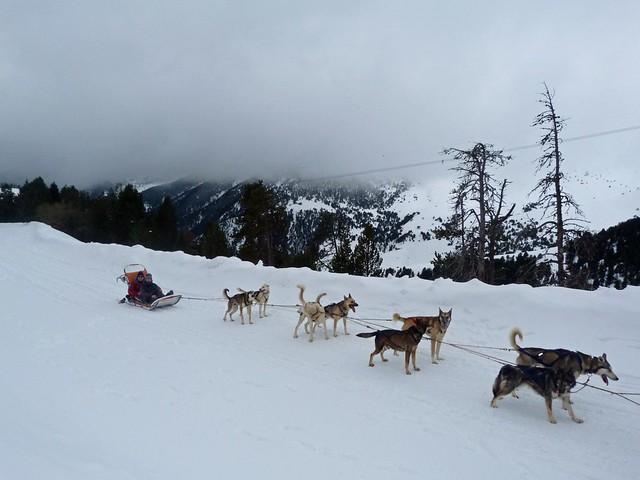 Trineo de perros en Andorra durante el invierno