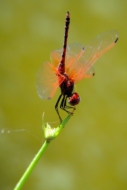 Dragonfly cooling down