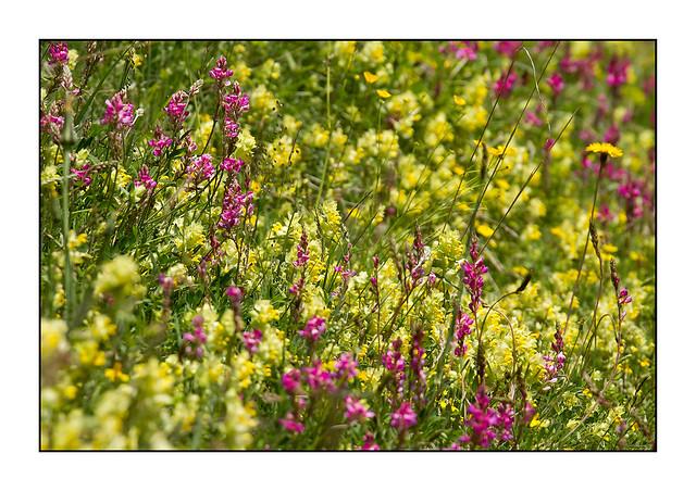 Flore montagnarde