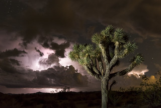 Stormclouds illuminated by lightning; 2015 Night Sky Festival | by Joshua Tree National Park