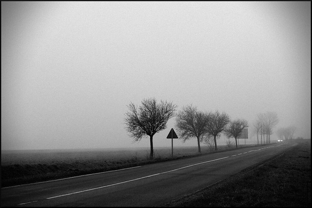 Fog_2274