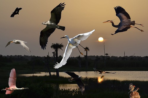 sunset sky sun lake water birds thegalaxy