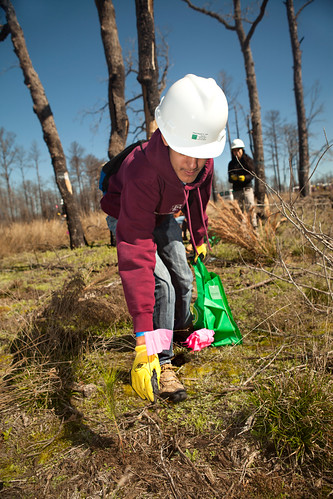 Aggie planting flags - Replant Bastrop
