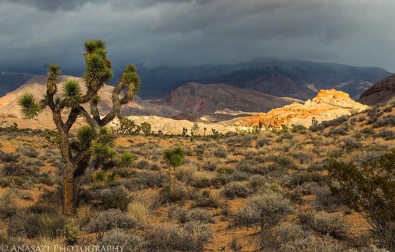 Stormy Spotlight