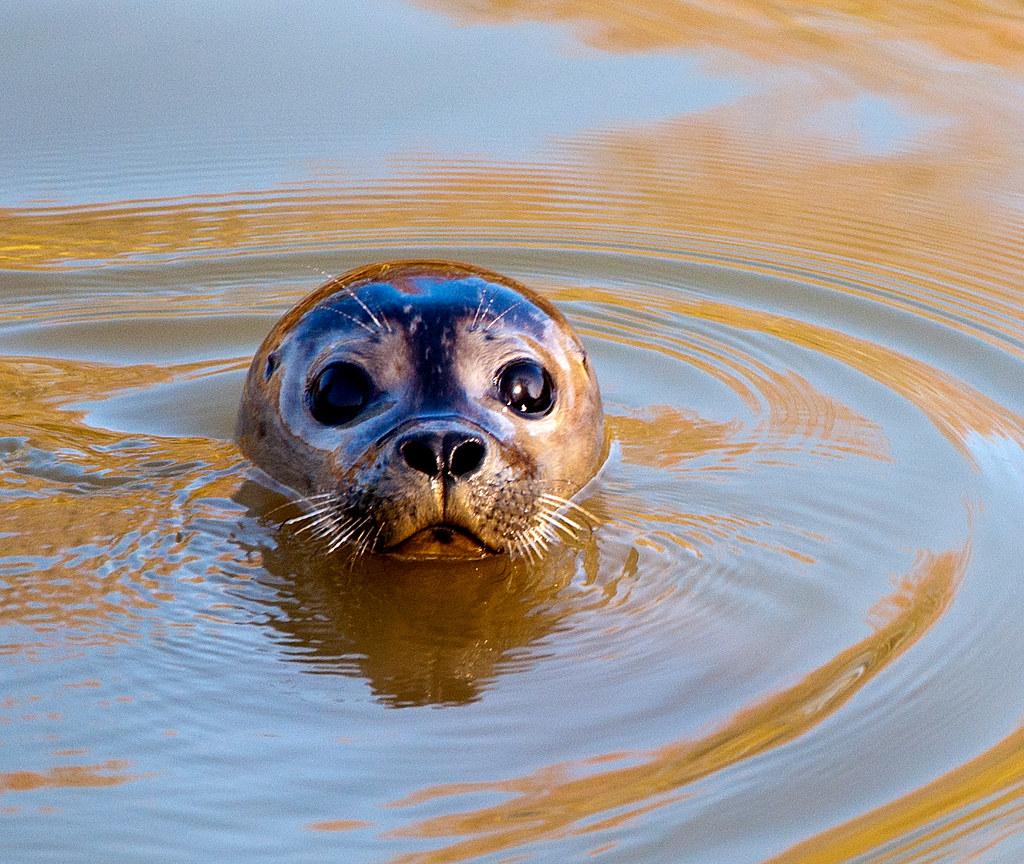 Sammy the Seal visits Peterborough.