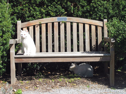 Swindler Cove Park Cats | by Kristine Paulus