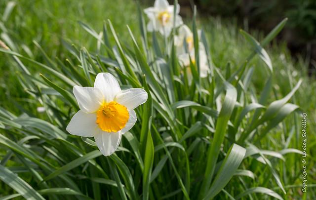 Easter flower blossom