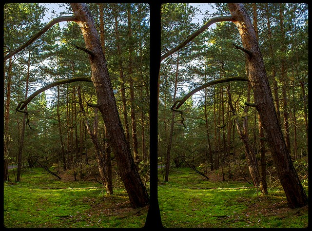 Heers forest 3-D / CrossEye / Stereoscopy / HDRaw