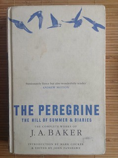 The Peregrine - J. A. Baker | by Mary Loosemore