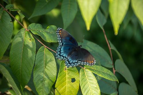 ballardnaturecenter altamont insect places butterfly nature illinois unitedstates us