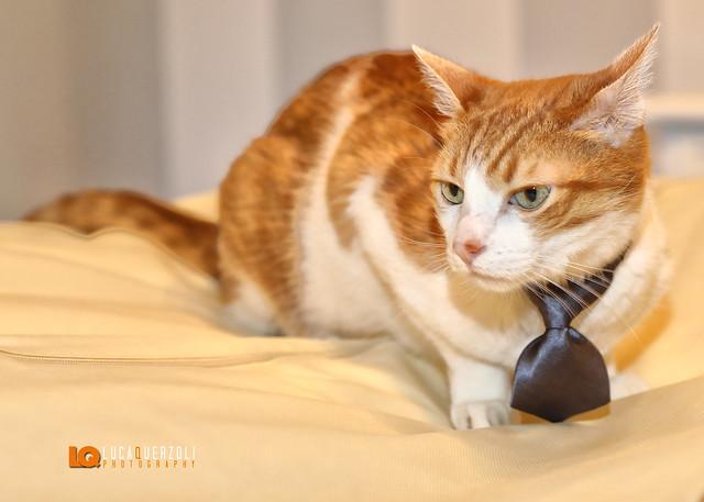 Tutti pronti per il #Matrimonio anche il #Gatto :-)