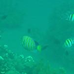 Le snorkeling à Amed