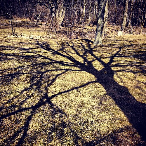 shadow tree nature square michigan squareformat iphoneography instagramapp xproii uploaded:by=instagram foursquare:venue=4b81a719f964a5207fb530e3