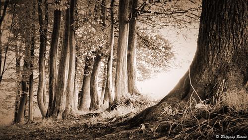 steinwingert ahlhausen altburg flögert mörsbach nister grosenister hachenburg kroppach kroppacherschweiz westerwald westerwaldsteig weltende naturpfadweltende rheinlandpfalz rhinelandpalatinate germany wällerwildlife waellerwildlife wolfgangburens burens natur nature naturfotografie sommer august burbach