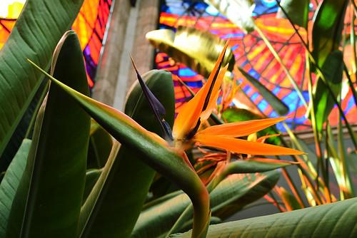 sunset flower macro green nature closeup architecture mexico nikon backlighting