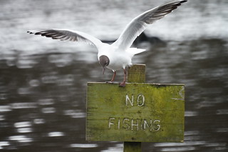 No Fishing | by tim ellis