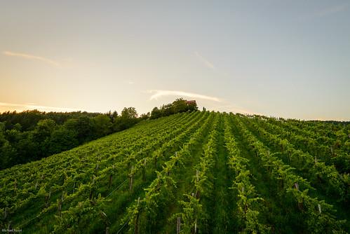 landscape landschaft sky green outdoor plants sunset vine vineyard wideangle
