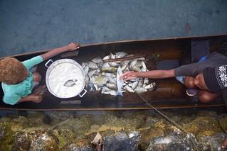 Children with fish in Lau Lagoon, Solomon Islands. Photo by Jan van der Ploeg. | by WorldFish