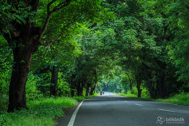Road in West Bali Forest