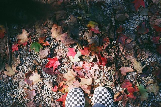 Vans in Autumn