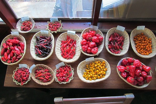 Chilli diversity on display during a tasting session for food industry entrepreneurs in Ucayali, Peru | by Bioversity International