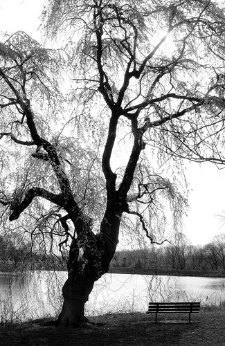 park white lake black tree water monochrome silhouette bench mono newjersey view nj jersey monmouthcounty holmdel