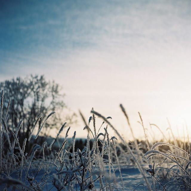 霜で覆われています