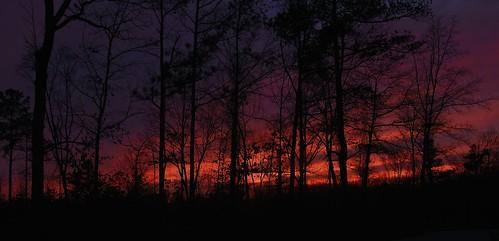 trees sunset sun nature clouds georgia landscape nikon d7000 vigilantphotographersunite vpu2