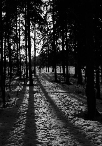 sunset shadow blackandwhite bw snow tree monochrome silhouette forest espoo suomi finland spring lumi puu metsä auringonlasku uusimaa kevät varjo laaksolahti