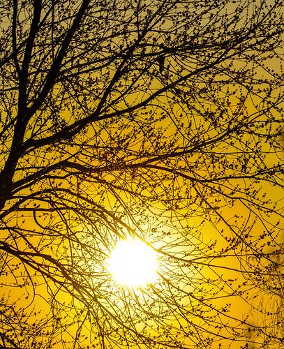 trees winter sunset orange sun tree yellow set last evening backyard neighborhood behind mygearandme