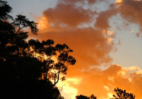 blue trees sunset orange clouds gum australia