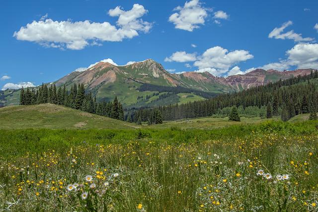 Wildflowers Near Gothic, Colorado