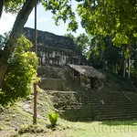Guatemala, Ruinas de Tikal 24