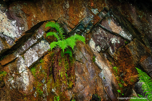Quarry Fern | by MikeChet