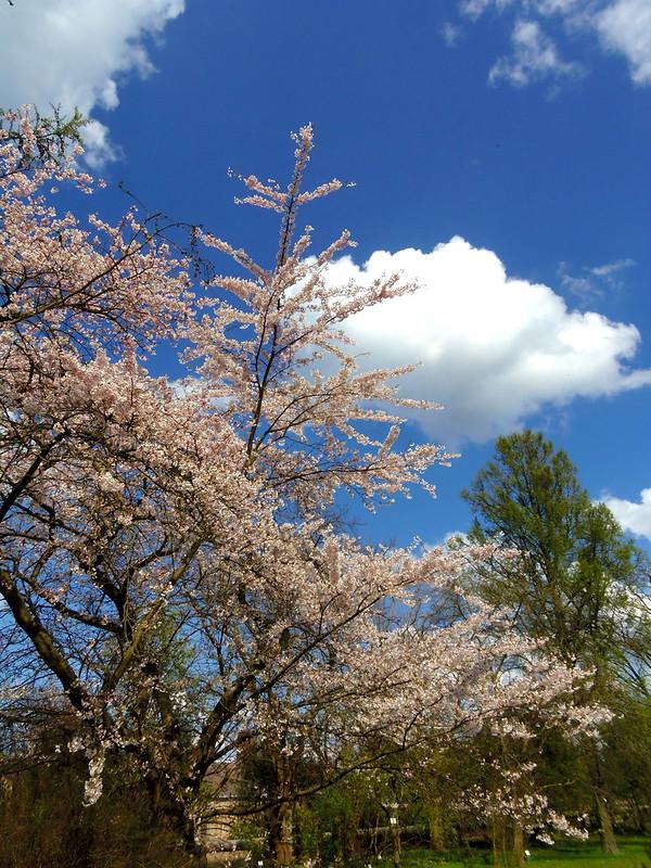 Весны цветенье / Hurra ! der Frühling ist da !