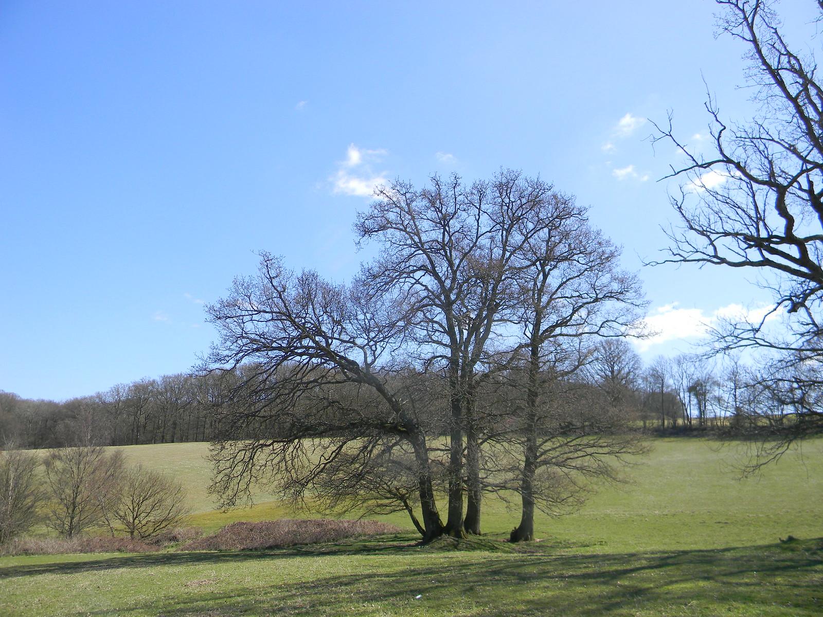 Tree Robertsbridge to Battle