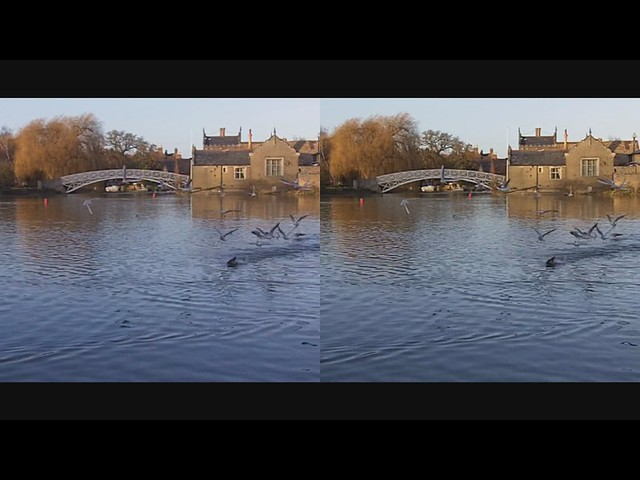 Sea Gulls flying - 3d movie clip - crossview